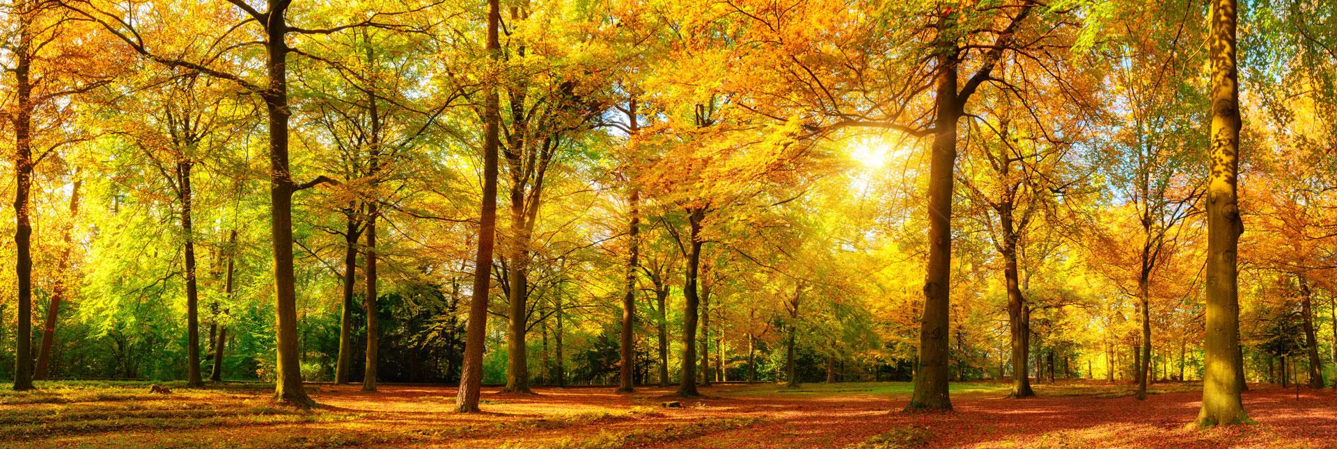 Herbst_klein